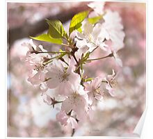 Tender Blossoms Poster