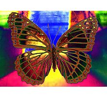Angel Butterfly Photographic Print