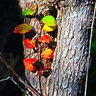 Leaves of an Apple Tree by Nazareth