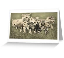 Kitten Adventure Greeting Card