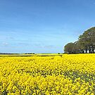 Rapeseed Oil Field. by Livvy Young
