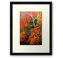 SYCAMORE Framed Print