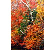 SYCAMORE Photographic Print