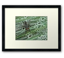 NS Fly Spa© Framed Print
