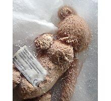 Frozen Teddy Bear #2 Photographic Print