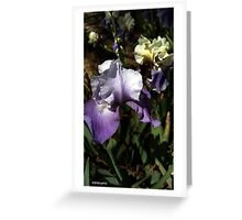 Purple Bearded Iris Greeting Card