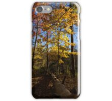 Of Fall and Fallen Giants - Autumn Forest in the Sunshine iPhone Case/Skin