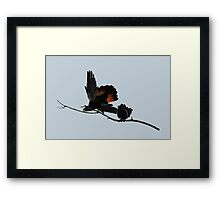 A Pair of Happy Black Cockatoos Framed Print