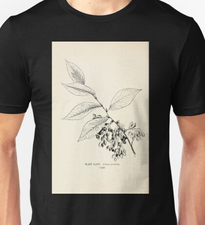 Southern wild flowers and trees together with shrubs vines Alice Lounsberry 1901 048 Ulmus Serotina Unisex T-Shirt
