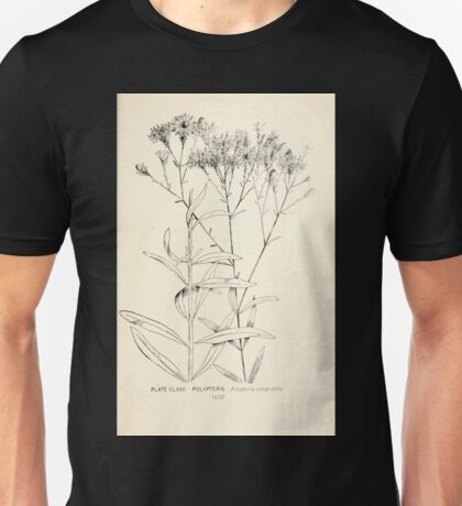 Southern wild flowers and trees together with shrubs vines Alice Lounsberry 1901 174 Polypteris Unisex T-Shirt