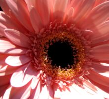 Happy Mother's Day card/tote/mug/pillow/case: gerbera daisy Sticker