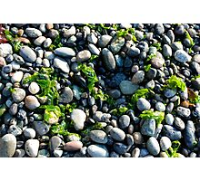 Seaweed and Rocks, Lopez Island Photographic Print