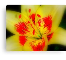 Abstract of a Lily Canvas Print