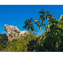 Grizzly Peak Photographic Print