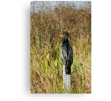 Anhinga Bird in the Everglades Canvas Print