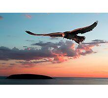 Evening Albatross Photographic Print