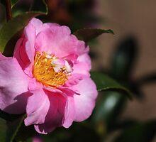 Camellia Dedication by Joy Watson