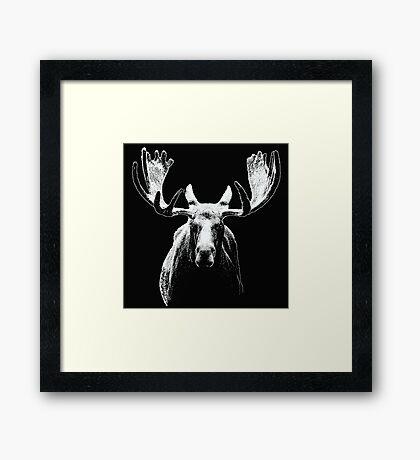 Bull moose white  Framed Print