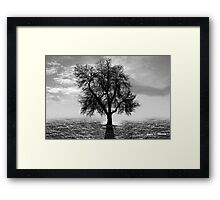 Tree, Office Art Framed Print
