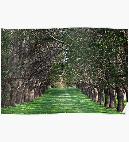 Trees - Country Victoria - Healesville Poster