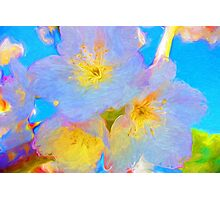 Magical Blossoms Photographic Print