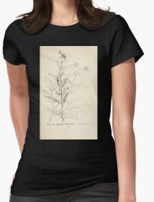 Southern wild flowers and trees together with shrubs vines Alice Lounsberry 1901 114 Maryland Meadow Beauty Womens Fitted T-Shirt