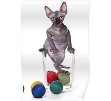 Cute Bald sphinx cat kitten Poster