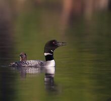 Wake-up call - Common loons by Jim Cumming