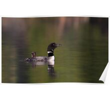 Wake-up call - Common loons Poster