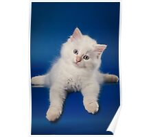 Fluffy charming cute kitty cat Poster