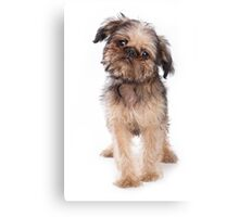 Funny fluffy puppy dogs Griffon Canvas Print
