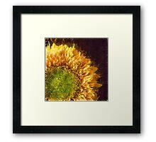 Sunflower Pencil Framed Print