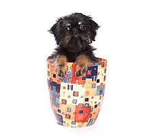 Funny fluffy puppy dogs Griffon Photographic Print