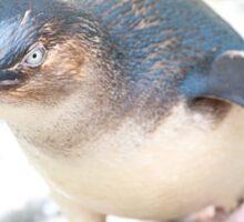 Curious Penguin Sticker