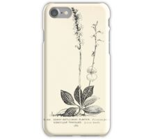 Southern wild flowers and trees together with shrubs vines Alice Lounsberry 1901 030 Downy Rattlestnake PLantain Kidney Leaf Twayblade iPhone Case/Skin