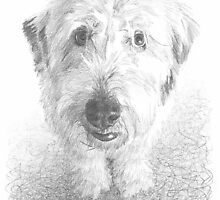 sheepdog drawing by Mike Theuer