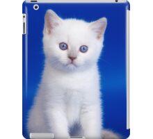 Lovely fluffy kitten charming British cat iPad Case/Skin