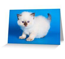 Lovely fluffy kitten charming British cat Greeting Card