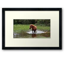 Wading in the pond Framed Print