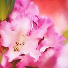 Painted Rhododendrons by Tracy Friesen