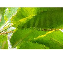 Whimsical Green Patterns - Tropical Impressions  Photographic Print
