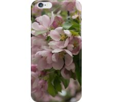 Blossoms and Buds - Springtime Apple Tree iPhone Case/Skin