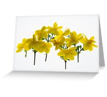 Back lit Flower petals photographed on a light box Greeting Card