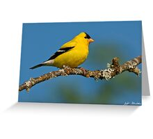 American Goldfinch Perched in a Tree Greeting Card