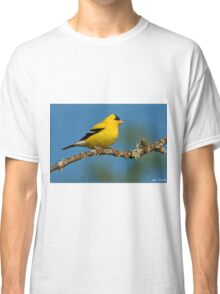 American Goldfinch Perched in a Tree Classic T-Shirt