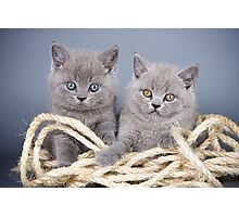 Charming fluffy kitten British cat Photographic Print