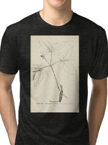 Southern wild flowers and trees together with shrubs vines Alice Lounsberry 1901 116 Five Leaved Ginseng Tri-blend T-Shirt