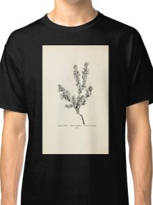 Southern wild flowers and trees together with shrubs vines Alice Lounsberry 1901 124 Hairy Laurel Classic T-Shirt