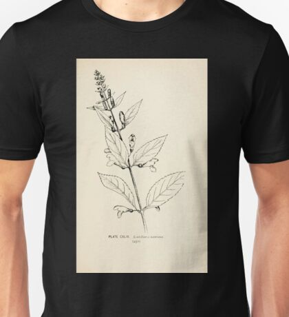 Southern wild flowers and trees together with shrubs vines Alice Lounsberry 1901 148 Scutellaria Montana Unisex T-Shirt