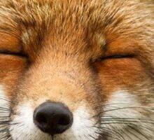 Cute Fox Sticker